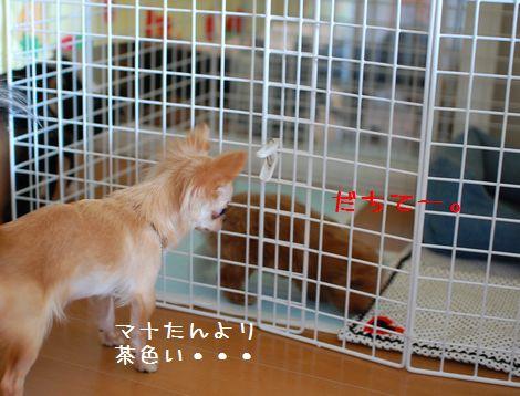 004_20080802180440.jpg