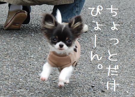 006_20080426191421.jpg