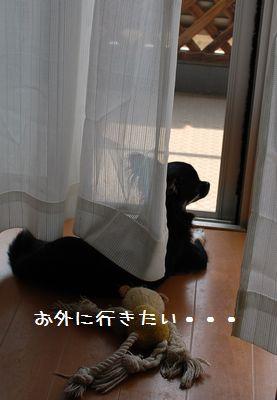 006_20080716205443.jpg