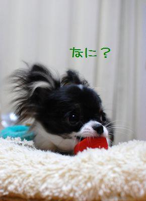 009_20080619204825.jpg
