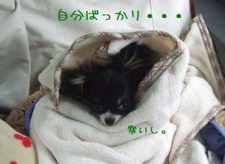 023_20080511184616.jpg