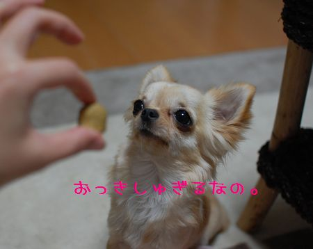 033_20080328210121.jpg
