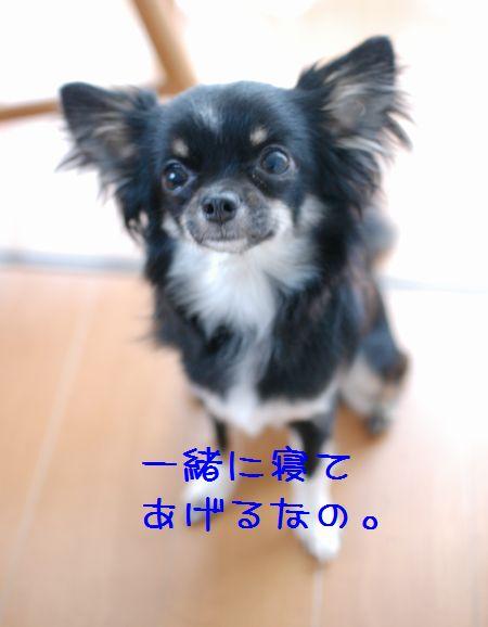 033_20080520172021.jpg