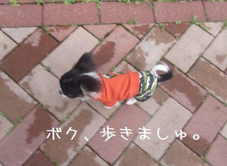 036_20080503201821.jpg