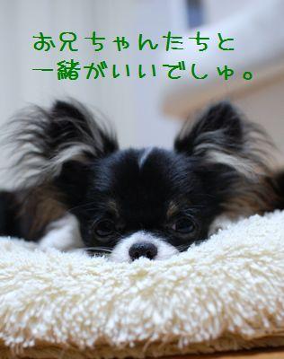 042_20080619205145.jpg