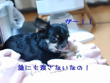 045_20080411194749.jpg