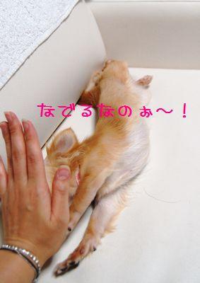047_20080703222144.jpg