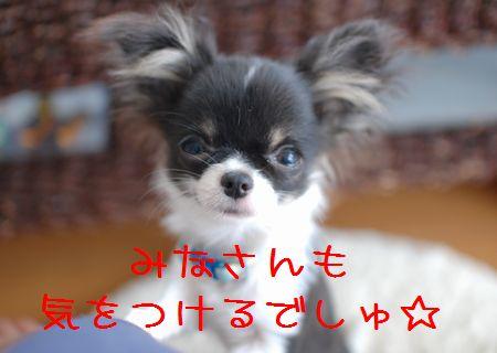 049_20080520172009.jpg