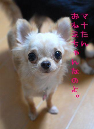 059_20080730213310.jpg