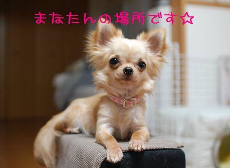 114_20080522211839.jpg