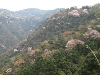 gosikidai0804-2.jpg