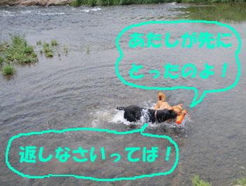 水の中のララと黒ラブクー
