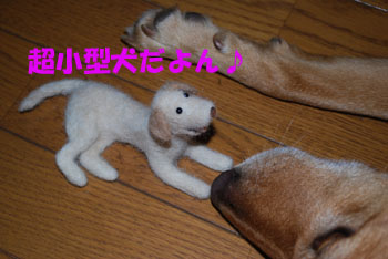 超小型犬だよん