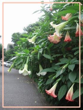 20080701_8.jpg