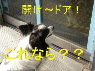 asa7_20080724104355.jpg