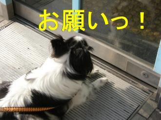 asa8_20080724104444.jpg