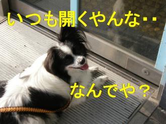 asa9_20080724104416.jpg
