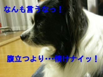boke8_20080613001143.jpg