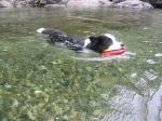 泳ぐライカ