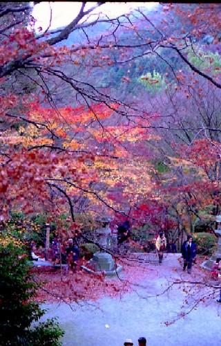 金蔵寺2002-1