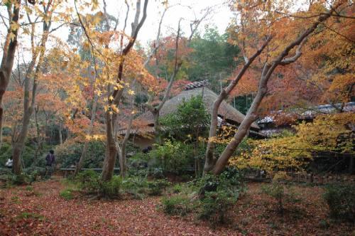 2006祇王寺の紅葉