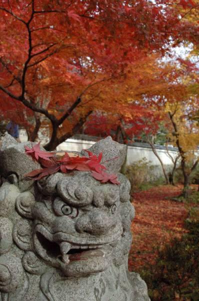 2006花の寺1