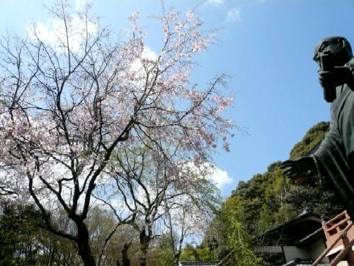 松ヶ崎大黒天のさくら2007