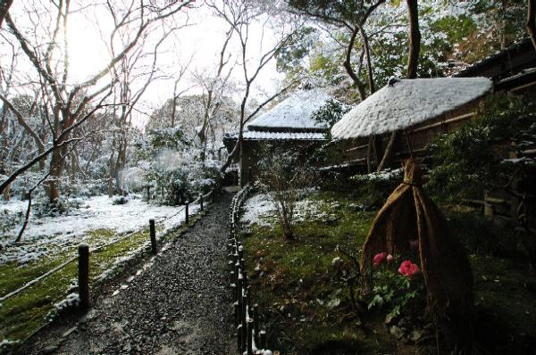 祇王寺の寒牡丹