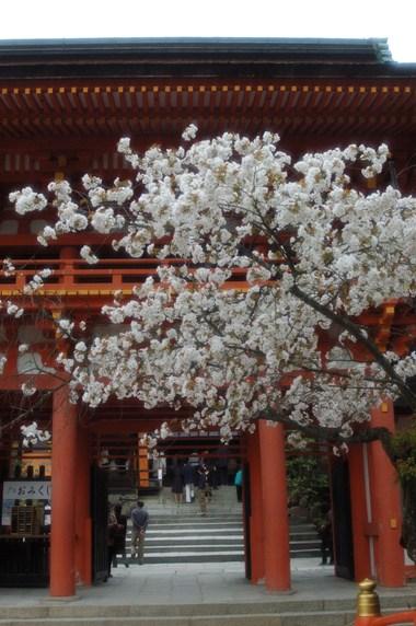 上賀茂神社 曲水宴 4