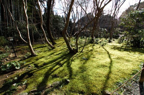 嵯峨野200802みどり