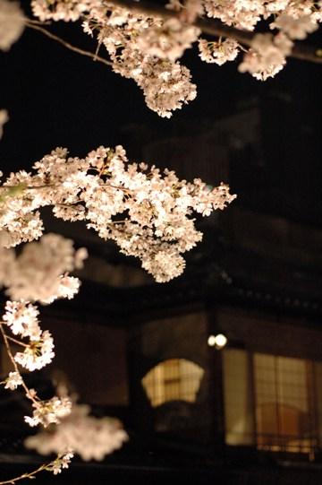 祇園白川の夜桜2008