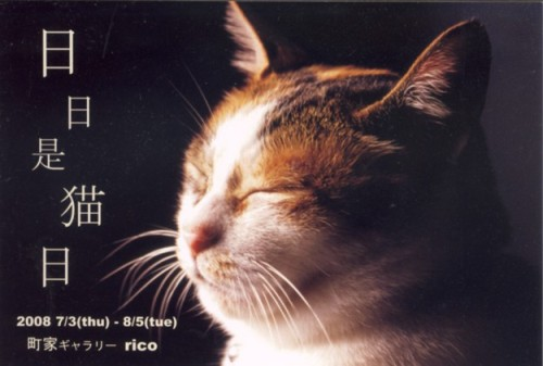 日々是猫日1