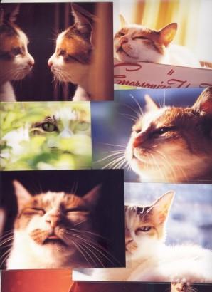 日々是猫日3