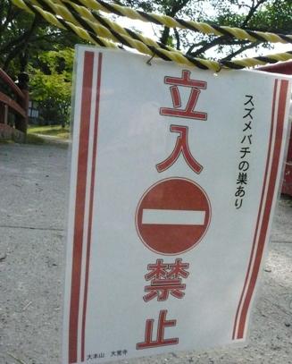 大覚寺 10