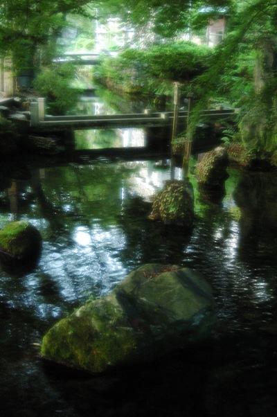 梅花藻 10