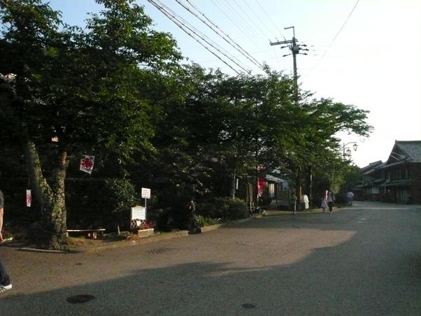 梅花藻 13
