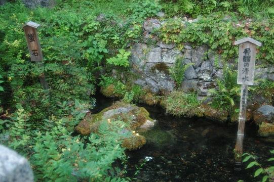 梅花藻 15