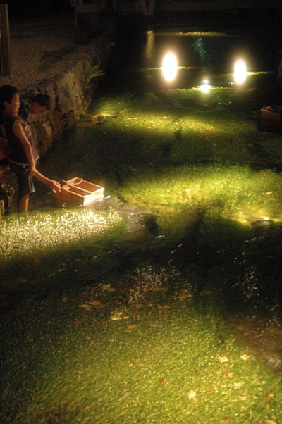 夜の 梅花藻 1