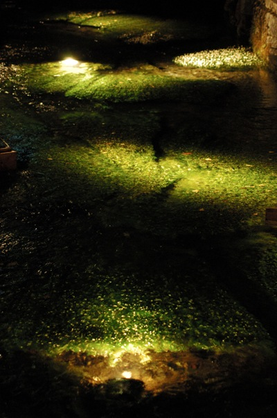 夜の 梅花藻2