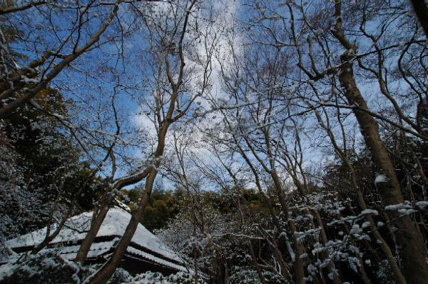 晴れた冬の祇王寺
