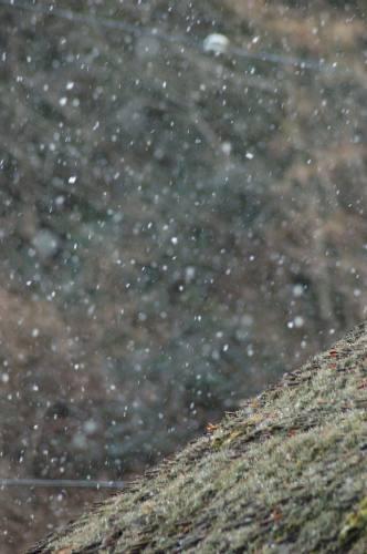 雪の鳥居本1