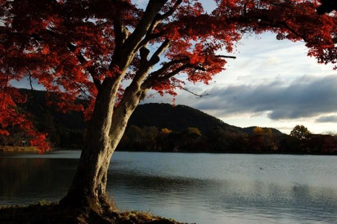 大沢池の秋2005
