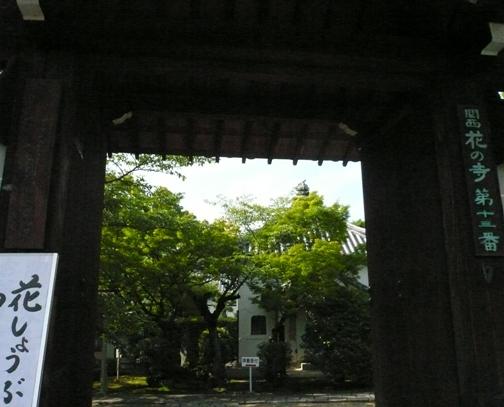法金剛院の沙羅の花3