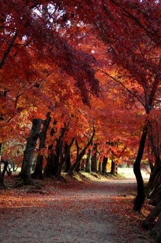 大沢池の紅葉2005
