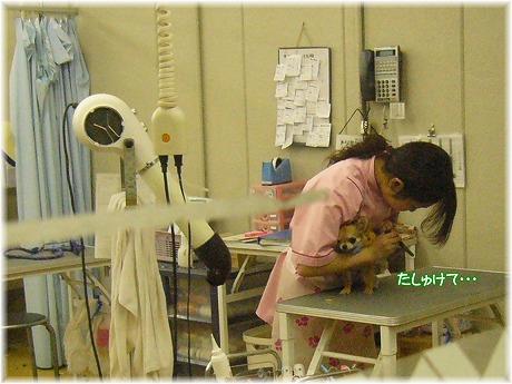 2008-03-22-5.jpg