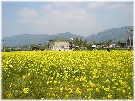 2008-04-29-6.jpg