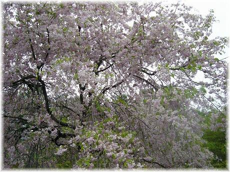 2008-05-05-05.jpg