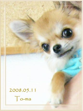 2008-05-11-5.jpg