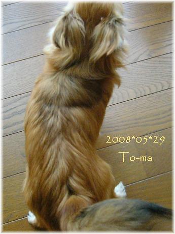 2008-05-29-7.jpg