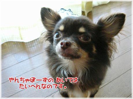 2008-06-01-10.jpg